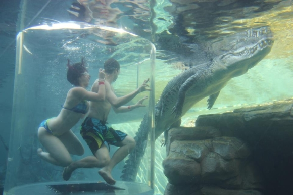 Amy in a glass tank swimming with Crocodiles in Darwin, Australia.