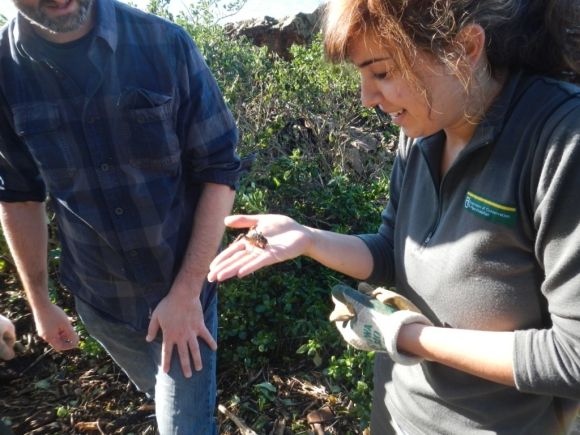 Amy holding a giant weta on Matiu Somes Island.