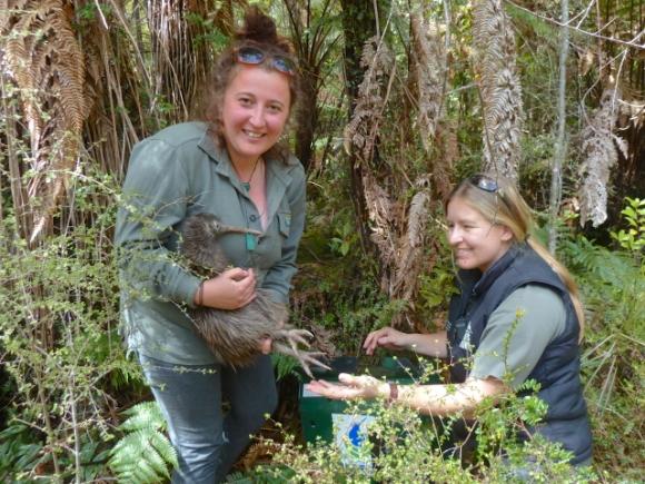 Releasing a kiwi back home in Okarito Sanctuary.