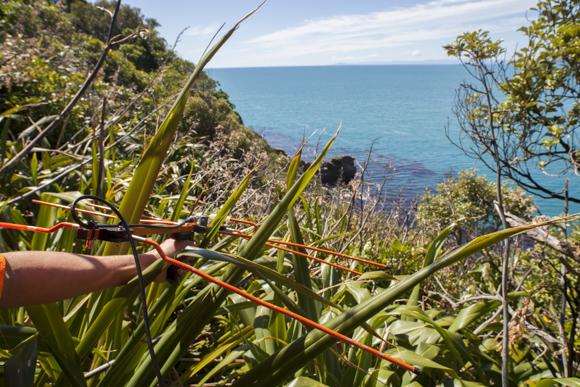 Tracking kiwi through flax bush using an aerial.