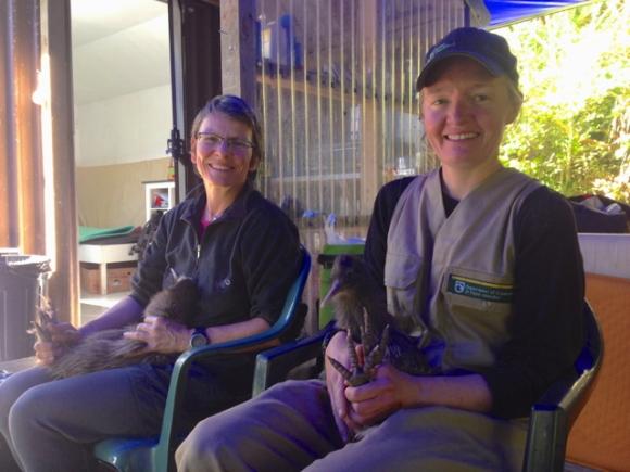 Volunteers preparing kiwis for trip to Okarito Sanctuary.