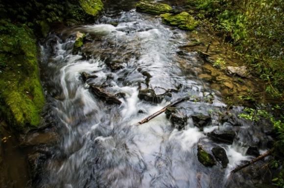 Ruakuri Reserve. Photo: Tim Bradley | CC BY-NC 2.0.