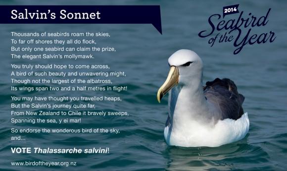 Salvin's sonnet.
