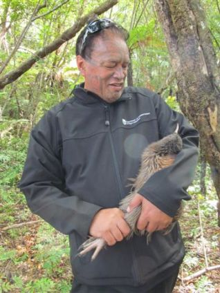 Joe Harawira holding a kiwi on a translocation to Chalky Island .