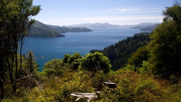 Bay of Many Coves, Queen Charlotte Sound.