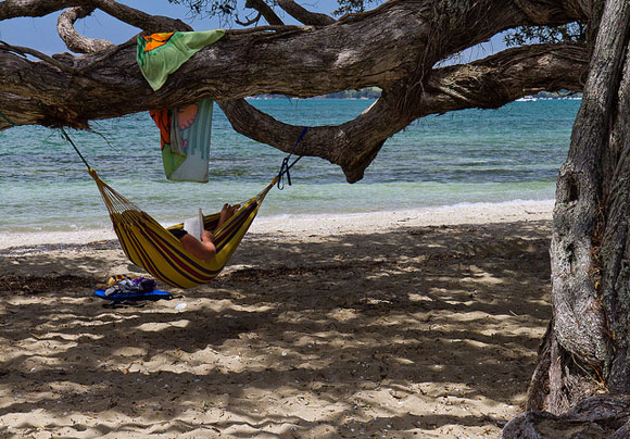Relaxing in the shade at Brick Bay. Photo: Phil Norton | CC BY-NC-ND 2.0.