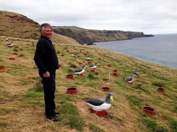 Bruce Tuanui at Albatross translocation site on South Chathams.