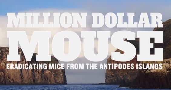 Million Dollar Mouse - Eradicating mice from the Antipodes Islands.