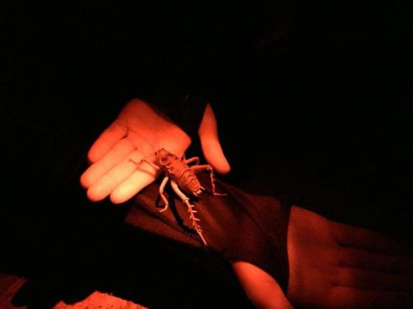 Holding a giant weta at night.