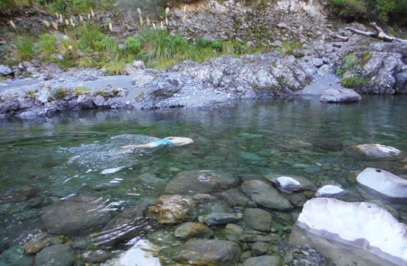 Tramping to roaring stag hut conservation blog for Roaring river fishing hours