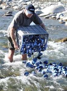 Andrew Smart releasing rubber whio/blue duck. Photo: Barry Harcourt.