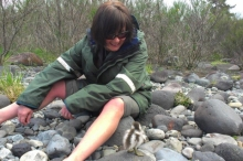 Heather Morison with a paradise duckling.
