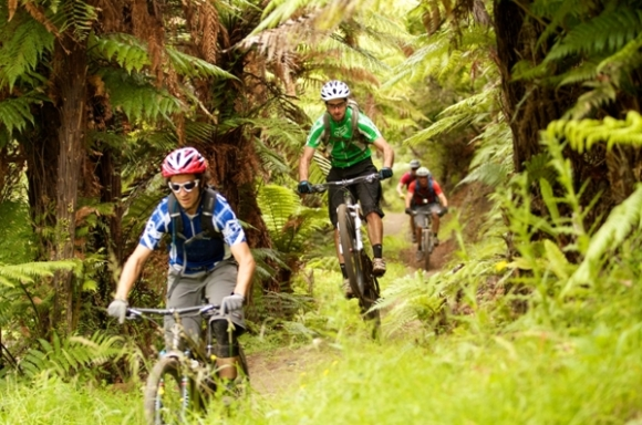 Mountain biking through forest near Rotorua.