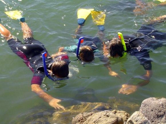 Children snorkelling, Pilot Bay, Mount Maunganui. Photo: S.Twaddle.
