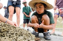 Uawanui Sustainability Project Bio Blitz. Tolaga Bay. Opoutama Cooks Cove field trip.