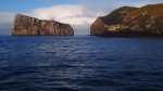 Antipodes Island. Photo: Million Dollar Mouse.