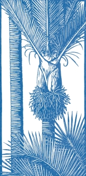nikau-palm-cave-creek-book-of-remembrance