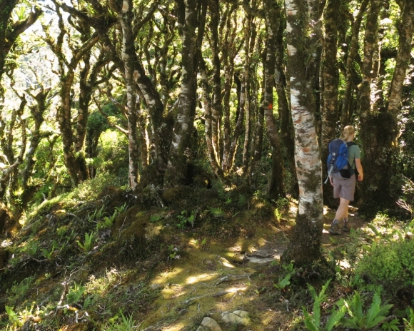 Tramping in Rimutaka Forest Park.