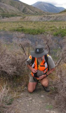 Takaka Ranger Simon Walls finding Dysphania pusilla at Molesworth Station.