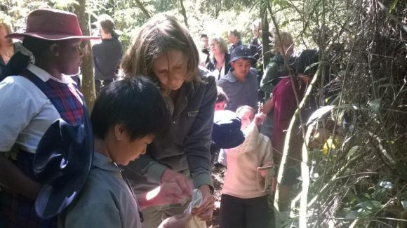 Biodiversity Ranger Anita Spencer helping to release the geckos at Riccarton Bush.