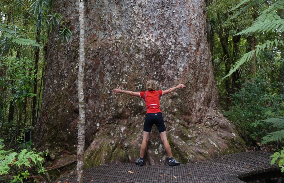 Blog: Walking among the giants of Waipoua Forest