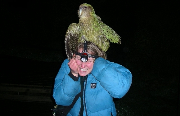 Sirocco the kākāpō climbing on Kerry Weston's head.