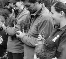 DOC rangers holding three kiwi being released into Rangataua Forest. Photo: Nina Mercer.