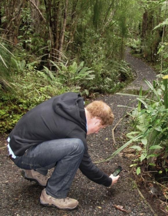 Prince Harry photographing a robin/kakaruai on Ulva Island. Photo: Andrea Crawford | DOC.
