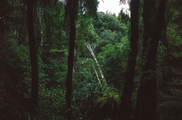 Forest trees at Pukaha Mount Bruce. Photo: Matthew Shore.