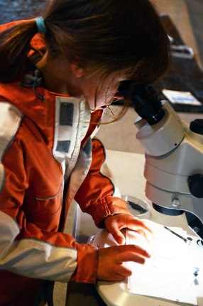 Jessica McPherson (age 7) viewing an invertebrate under the microscope.