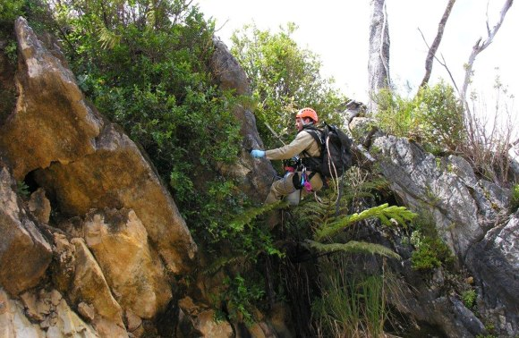 DOC ranger abseiling on Mt Burnett.