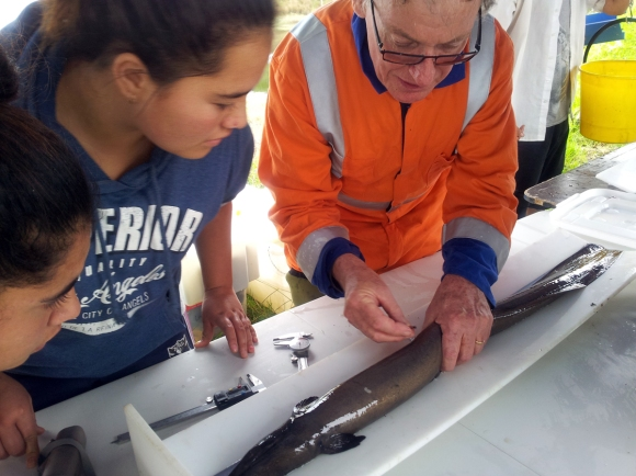 NIWA scientist Jacques Boubee tags tuna with school children.