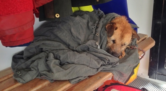 Tike the dog sleeping in a jacket after a hard days work.