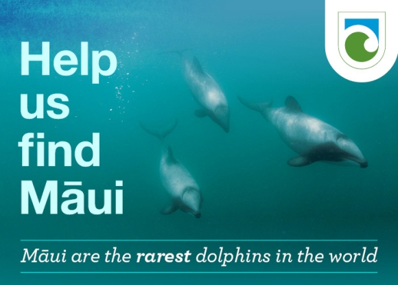 Infographic: Help us find Māui. Māui are the rarest dolphins in the world.