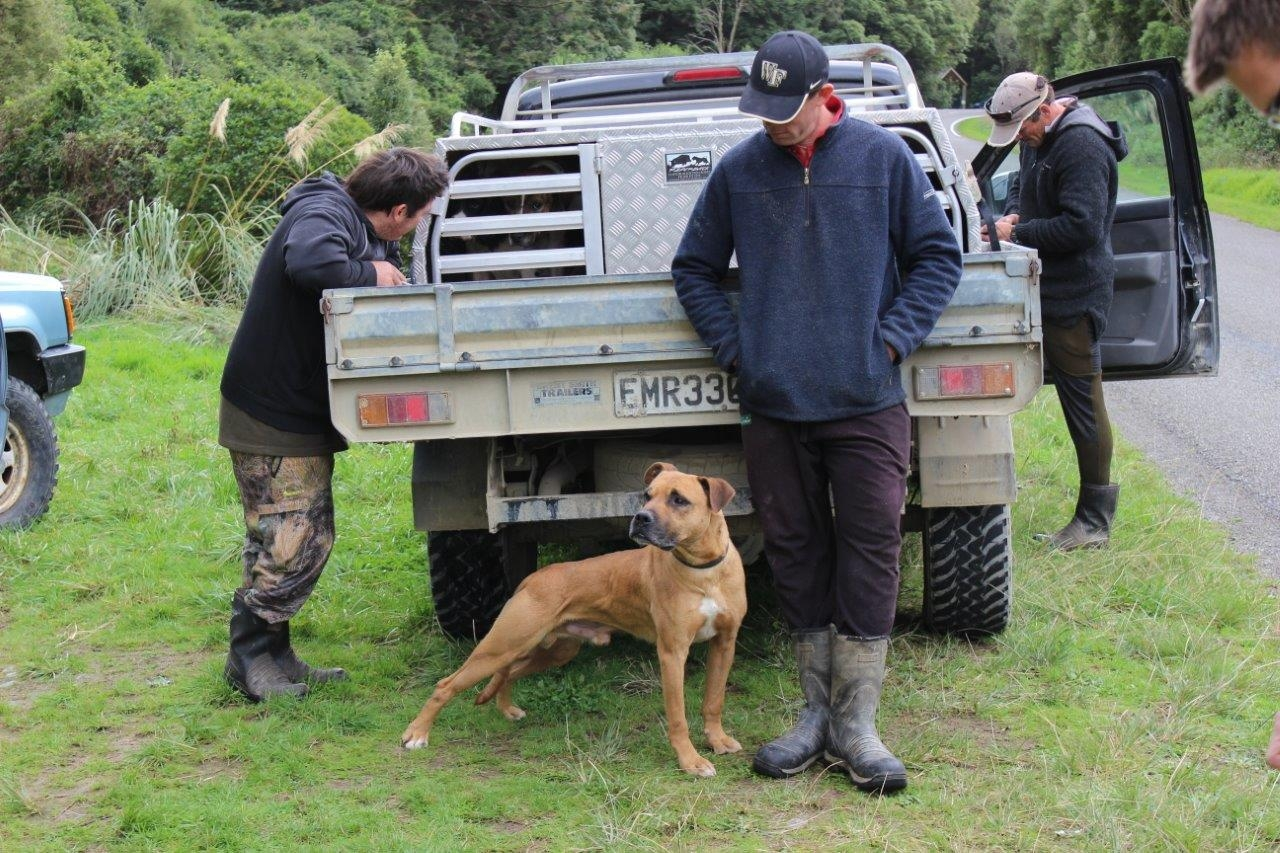 Blog: Kiwi lessons for dogs going bush