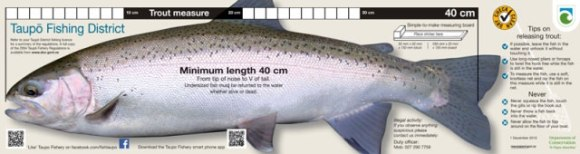 The trout measure.