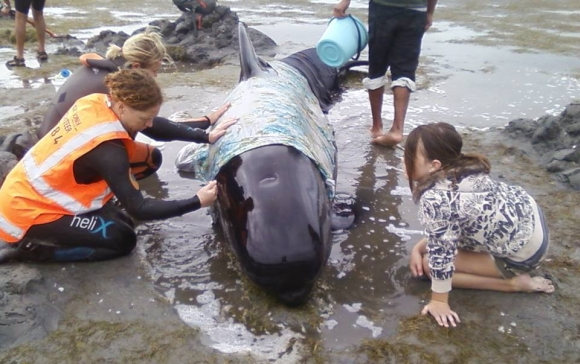 Local children and volunteers helping a stranded pilot whale.