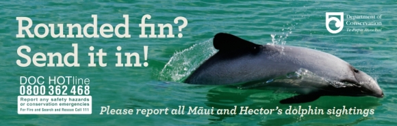 'Rounded fin? Send it in' Māui dolphin sighting bumper stickers.