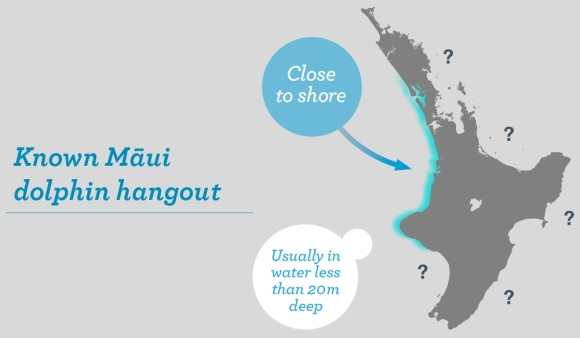Known Māui dolphin hangout infographic. They are found close to shore, usually in water less than 20m deep.