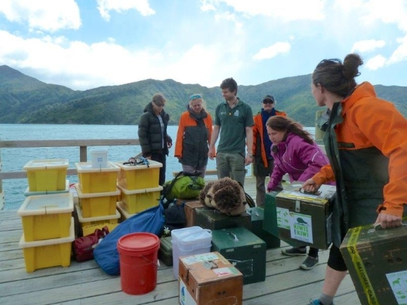 The team preparing for the annual transfers of chicks back to Okarito Forest.