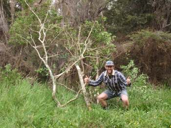 Tackling woody weeds at the Wairua River Reserve