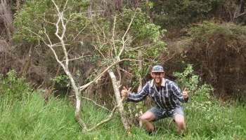 Tackling woody weeds at the Wairua River Reserve