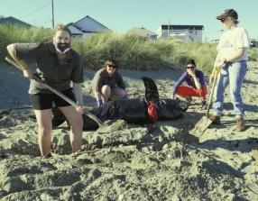Whale stranding.