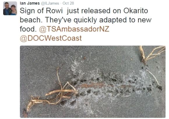 rowi-kiwi-ian-james
