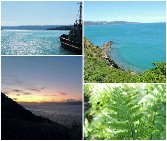 (Clockwise from top left) Wellington harbour from the waterfront, view from Matiu/Somes, a fern frond in one of the seedling gardens, and dusk on the island..