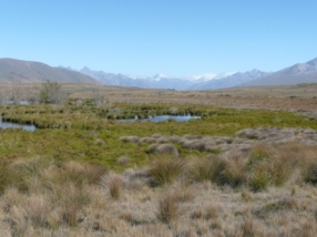 Wetlands downstream of Lake Clearwater now managed as part of the Hakatere Conservation Park. Photo: K Bodmin/NIWA.