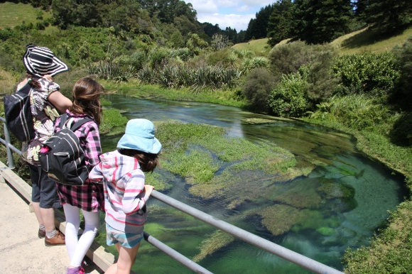 Te Waihou Springs, where clear blue waters bubble out of the ground. Photo: Adrienne Grant.