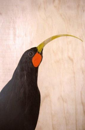 Huia by Sarah Matthew.