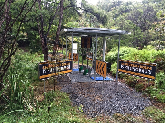 One of the kauri dieback cleaning stations.