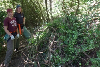 Lessons from a summer spent weeding